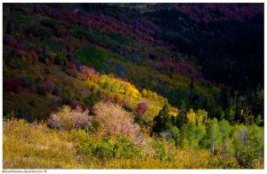 Fall Color by schpidah
