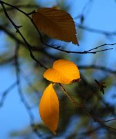 autumn contrast by SvitakovaEva