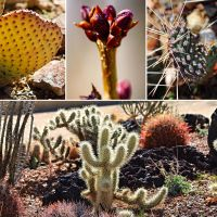 Cactus Alley Collage by Monkeystyle3000