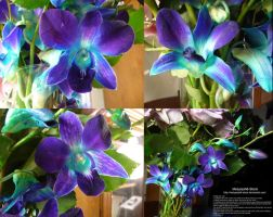Purple and Cyan Orchids Stock 2 by Melyssah6-Stock