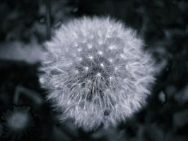 Blow and make a wish by anaPhenix
