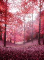 Red forest by Inilein
