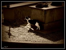 Cat cemetery on edge .... by kakobrutus