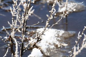 Mid-Morning Frost by greenwalled1