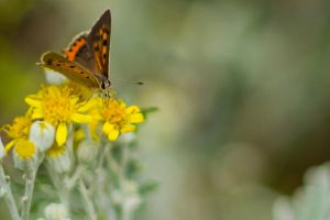 yellow flower with butterfly by elspeth-66