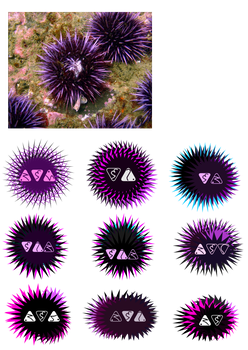 Trill Sea Urchin Signs by AJHalliwell