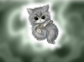 Kitteh by Moonblizzard