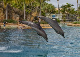 STOCK - Seaworld 2013-61 by fillyrox