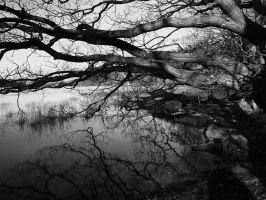 Cold Reflections Black White 1 by trevj
