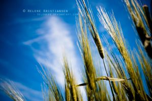 Wheat by Heleneee