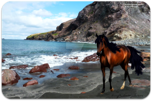 Bay Horse on the Beach by jackiehorse