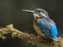 A Sparkle in his eye by Jamie-MacArthur