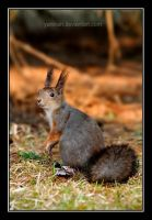 Squirrel by Yaninah