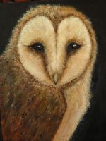 barn owl, done for now by dlockett2