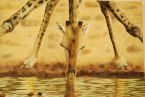 Giraffe by TreeSkipper