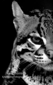 Ocelot Stare by Shadow-and-Flame-86