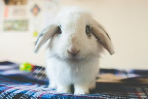 Elric The Bunny! by jamiedenton