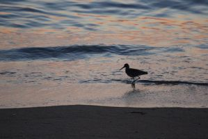 Bird in Waves by Cats-go-moo-always