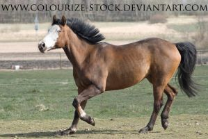 Paintabian Stock 3 by Colourize-Stock