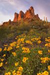 Spring fling by PeterJCoskun