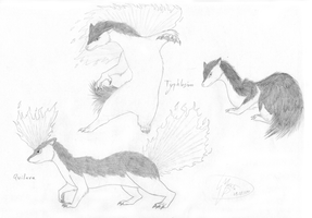 Quilava, Typhlosion sketchs by Weirda208