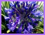 ''  Purple ~ Passion  '' by EVEL-ONE