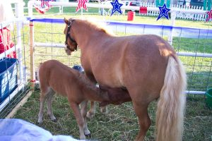a miniature horse and her baby by Malificent