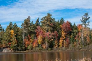 Barnum Pond color by funygirl38