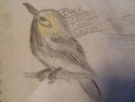 Black Throated Green Warbler by WolfLover0925