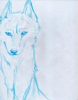 Ice Wolf by ZacharyWolf