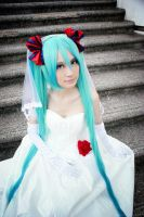 August's Bride - H. Miku: Dazzling Light by farizasuka