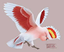 Major mitchell's cockatoo by namu-the-orca