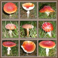 Stock images - Mushroom Collection 01 by M10tje
