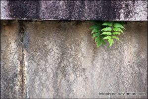 Life finds a way by telophase
