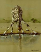 Giraffe at watering hole by marcgosselin