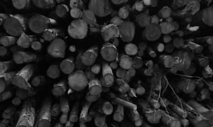 Logs by LouisTN
