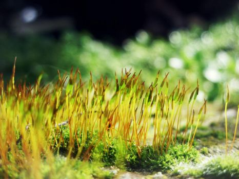 Moss 2 by treatme
