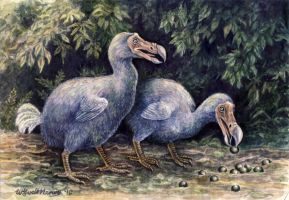 Dodos by WillemSvdMerwe