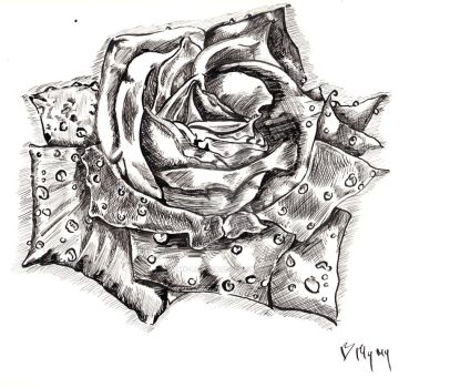 Pen and ink rose by Mymy-La-Patate