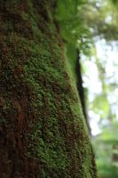 Tree Moss by ABowey