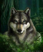 Grey wolf in the dark forest by syren007