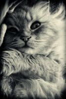 Lovely cat by GabrielRigby
