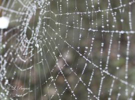 dripping web by klbryanphotography