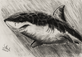 Graphite great white. by SulaimanDoodle