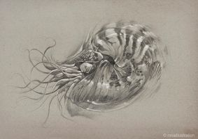 Nautilus by noiaillustration