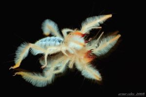 197.Camel spider by Bullter