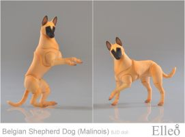 Malinois 04 by leo3dmodels