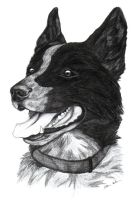 Dog commission 1 by UndeterminedBreed