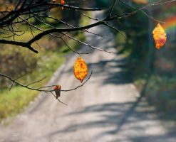 autumn road by KariLiimatainen