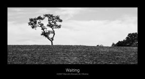 Waiting by KDEWolf